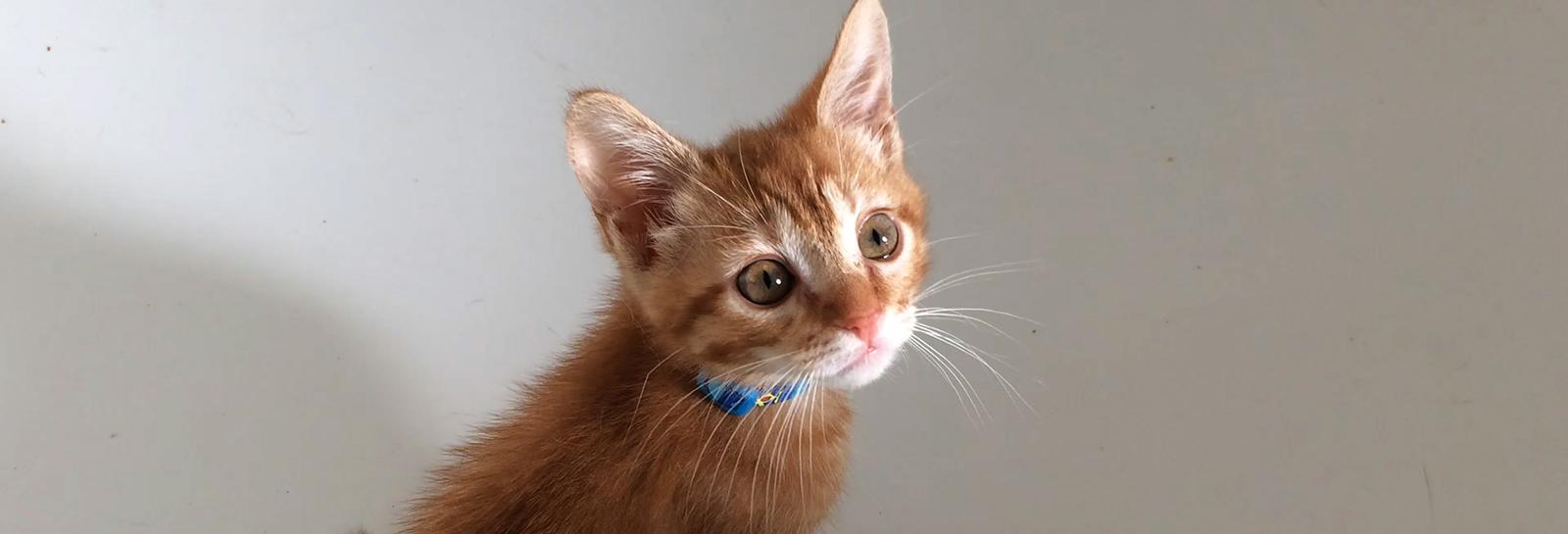 Cat Rescue Hampton Roads