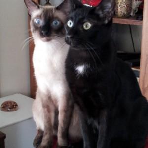 Bodhi & Arthur